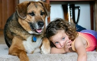 Pet & Kid friendly Carpet Cleaning Gainesville, Newberry, Alachua, FL